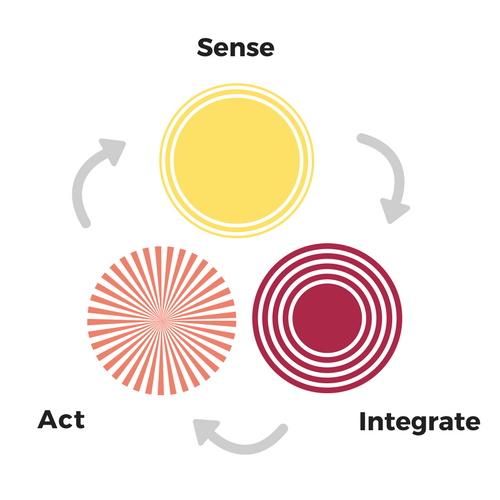 Biology of learning diagram - sense - integrate - act
